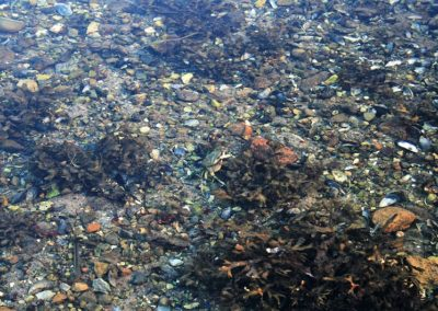 Fjordens klare vand er en oplevelse for lystfiskeri